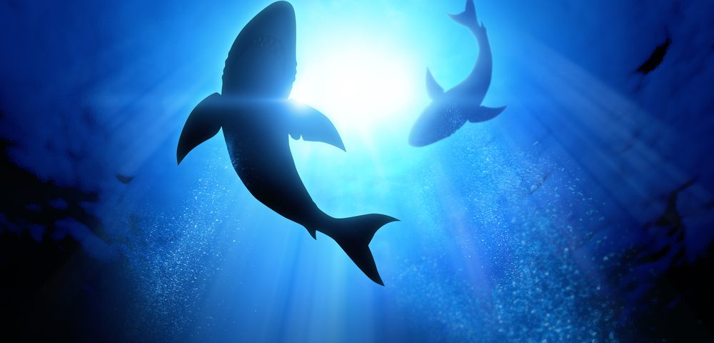 AdAlta's Shark Antibody, Potential Way of Treating Lung Fibrosis, Nearing 1st Clinical Trial