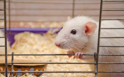 PETA Donates Systems for Animal-free Inhalation Tests to Centers in US and Europe
